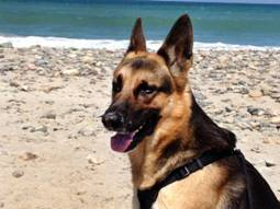 http://www.mspca.org/assets/images/angell-images/angell-internal-medicine/kaiser-beach-walk.jpg