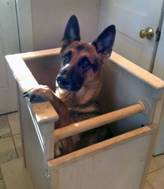 http://www.mspca.org/assets/images/angell-images/angell-internal-medicine/kaiser-bailey-chair.jpg