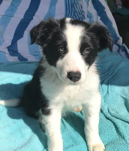 Need Foster or Forever Homes – Rehoming Megaesophagus Dogs